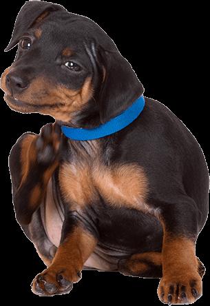 home-dog-1